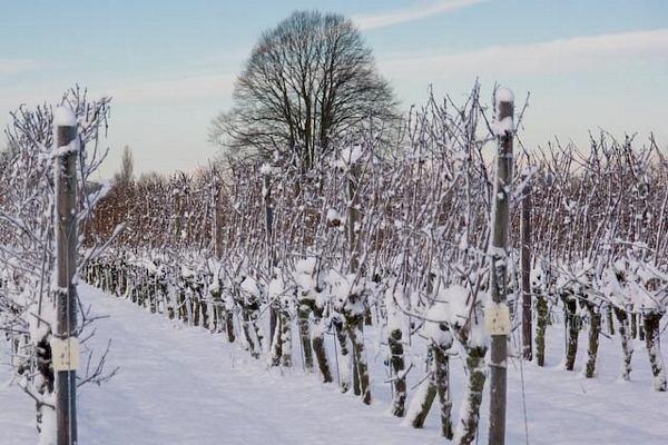 Wijngaard De Daalgaard