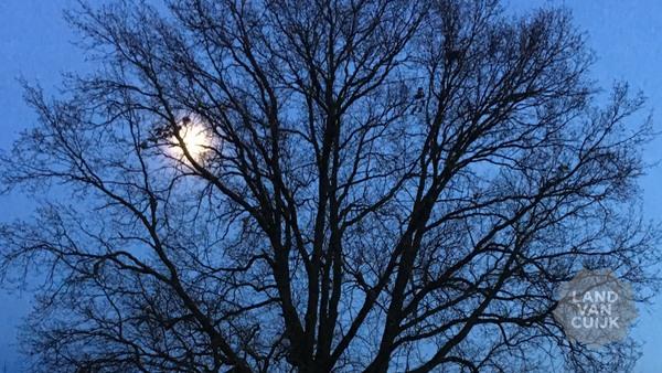 IVN Avondwandeling Nacht van de Nacht rond de Molen Gassel