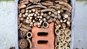 Insektenhotel maken