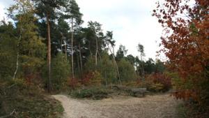 Wandeling Overloonse bossen