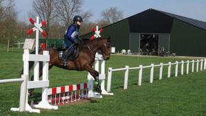 Open Dag Paarden en Ponyvereniging 't Raamdal