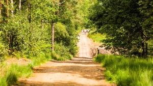 Natuurbegraafplaats
