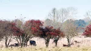 Herfststruintocht door de oude Maasbocht bij Keent