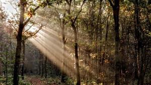Bijzonder wandelen in het bosrijke Overloon!