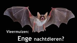 GEANNULEERD - Vleermuizen: enge nachtdieren?
