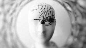 brein plaatje