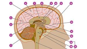 Breincollege Hoe houd ik mijn hersenen gezond