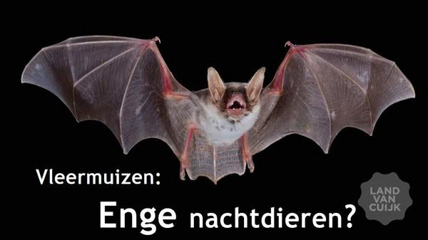 Vleermuizen: enge nachtdieren?