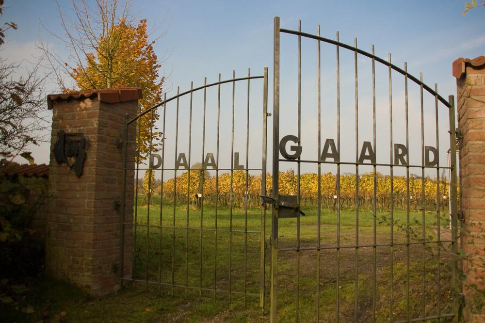 Wijngaard de Daalgaard - Rondleiding & Proeverij