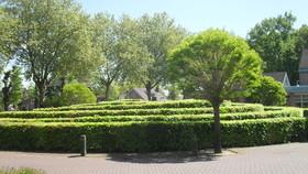 Langenboom